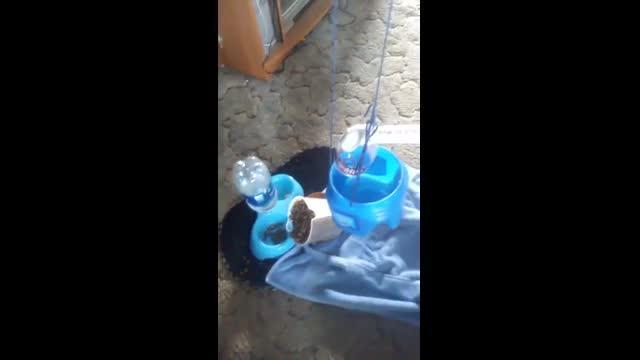 Cat foodalizer